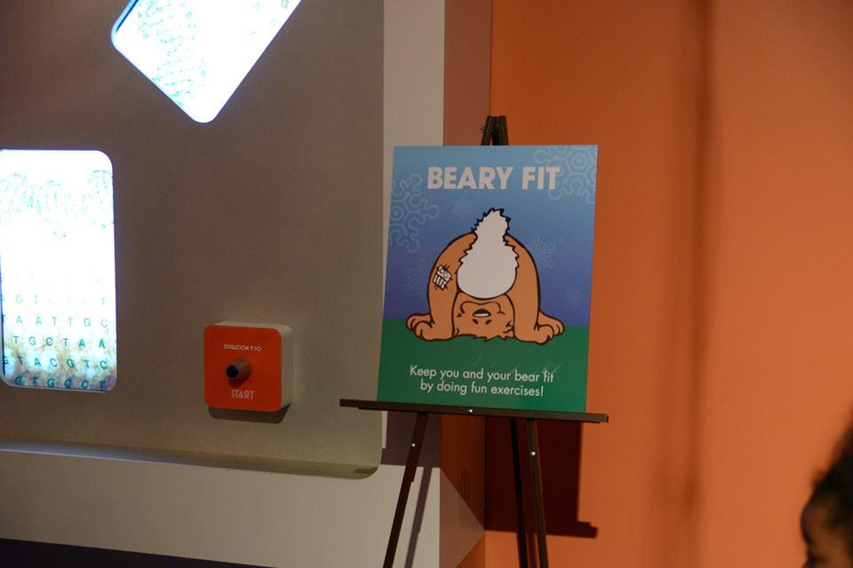 bear-fit